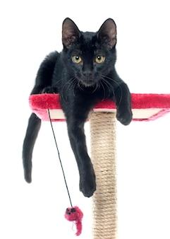 Zwart kitten spelen