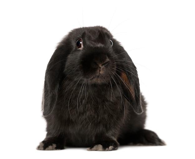 Zwart konijn (5 maanden oud)