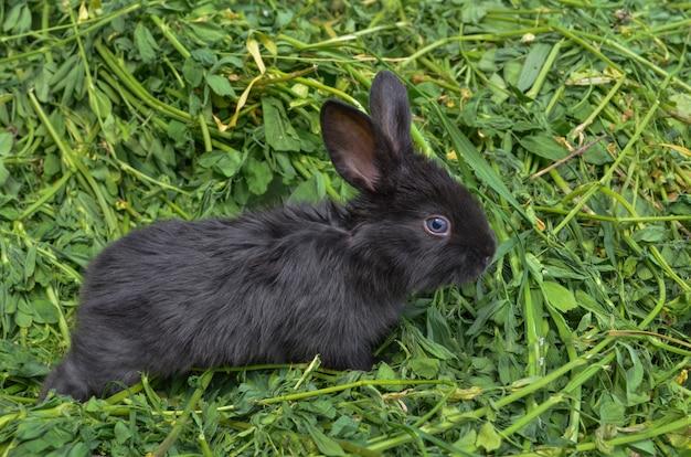 Zwart konijntje