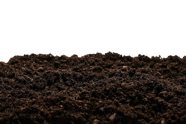 Zwart land voor geïsoleerde plant.