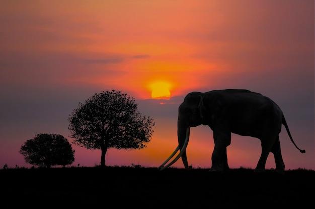 Zwart olifantssilhouet op zonsondergangachtergrond bij het nationale park van phu khieo, chaiyaphum-provincie, thailand