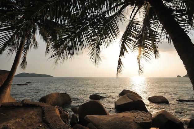 Zwart silhouet van een kokospalm op het strand