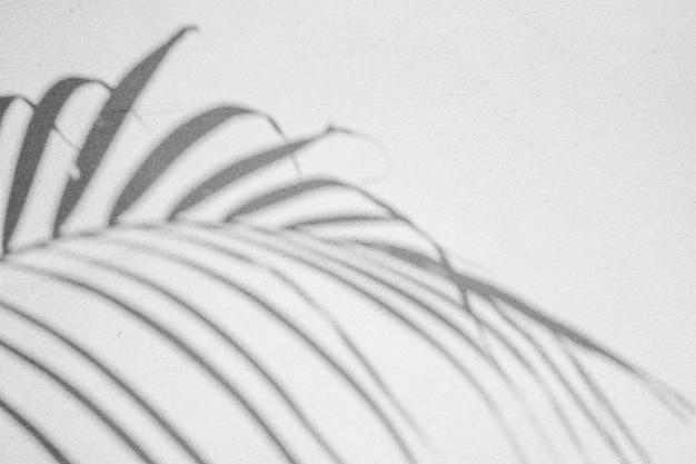 Zwart-wit abstracte achtergrond textuur van schaduwen blad op een betonnen muur.