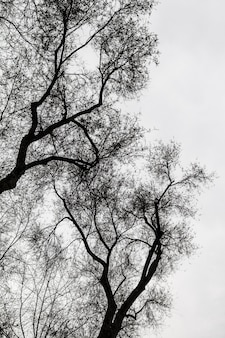 Zwart-wit bomen silhouetten