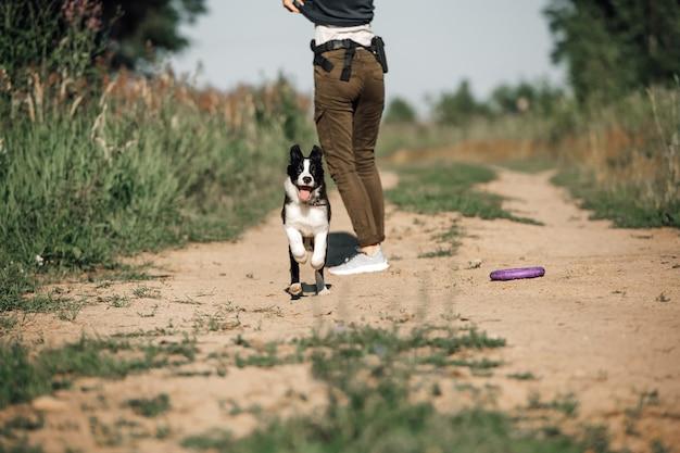 Zwart-wit border collie-hondpuppy die in het gebied lopen