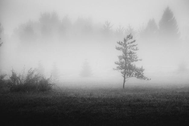 Zwart-wit foto van gazon in bos