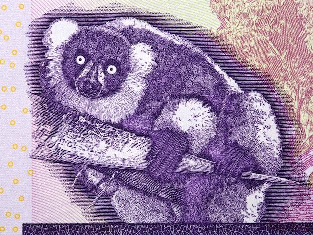 Zwart-wit getuide maki uit madagaskar geld