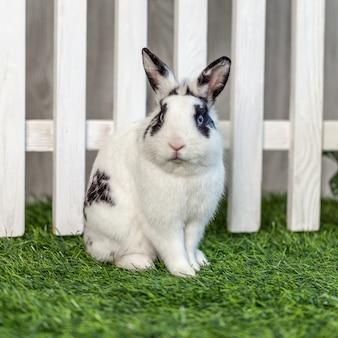 Zwart-wit konijn op gras in de buurt van het hek