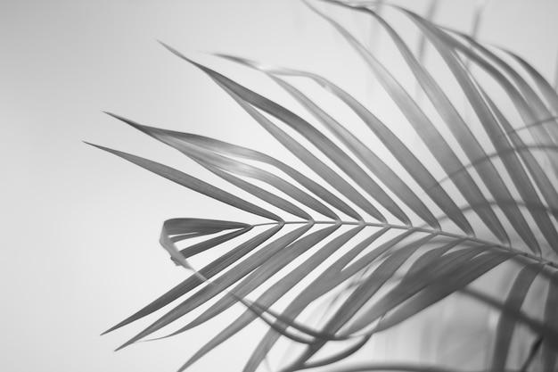 Zwart-wit palmbladeren met schaduw op de muur