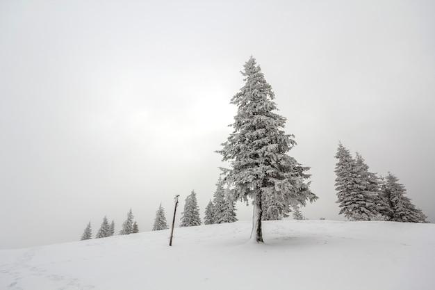 Zwart-wit winter berg nieuwjaar kerst landschap. alleen geïsoleerd hoge dennenboom bedekt met vorst in diepe heldere sneeuw op kopie ruimte achtergrond van witte lucht en zwarte woud aan de horizon.