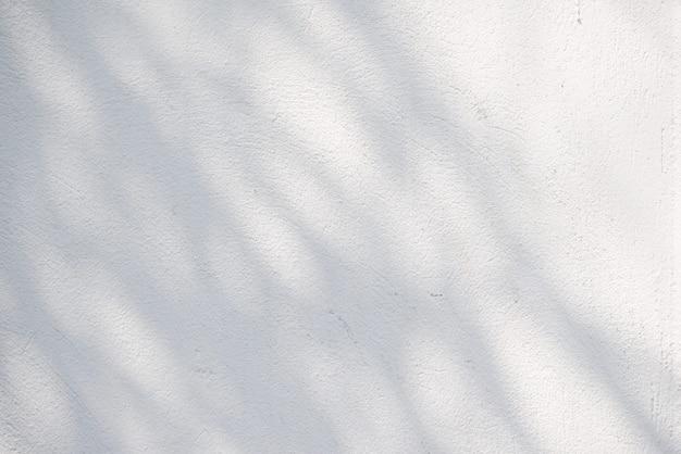 Zwart-witte abstracte achtergrond textuer van schaduwenblad op een concrete muur