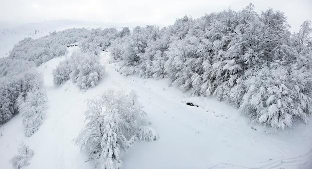 Zwart-witte achtergrond van bomen in het bos zonder bladeren in een winterboerderij met een achtergrond van sneeuw en witte mistige hemel. winter berglandschap