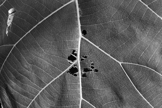 Zwart-witte dichte omhooggaande bladtextuur