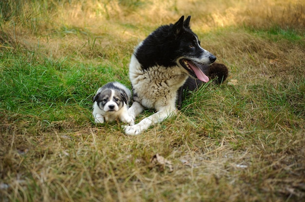 Zwart-witte hond die dichtbij haar klein puppy op het gras ligt