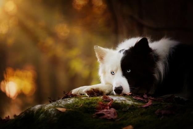 Zwart-witte hond in het bos in de herfst