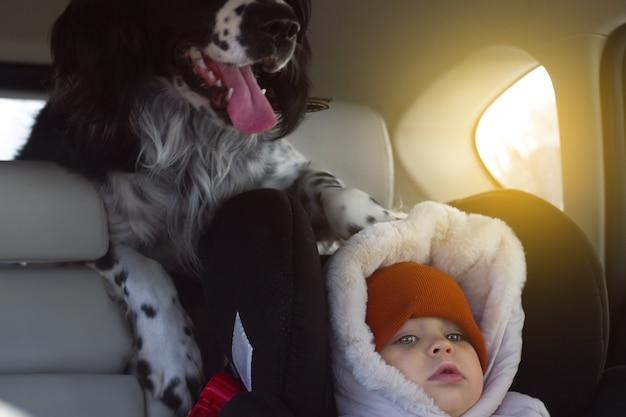 Zwart-witte hond russische spaniël rijdt in de auto in de kofferbak van een cross-over met kinderen