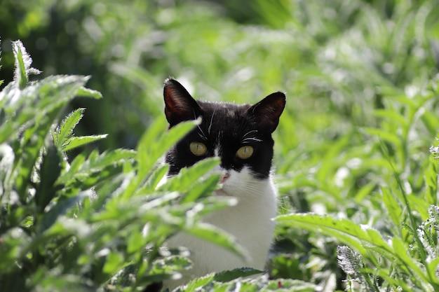 Zwart-witte huiskat die op een zonnige dag in groen gras rust
