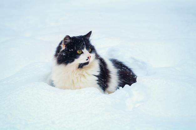 Zwart-witte kat die in de sneeuw loopt