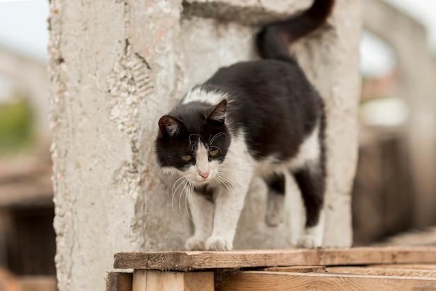 Zwart-witte kat die in een landbouwer loopt