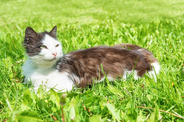Zwart-witte kat die op het groene gras ligt