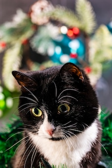 Zwart-witte kat en kerstmisspeelgoed.