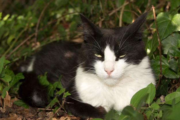 Zwart-witte kat in het gras