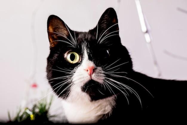 Zwart-witte kat met een expressief kijkclose-up.