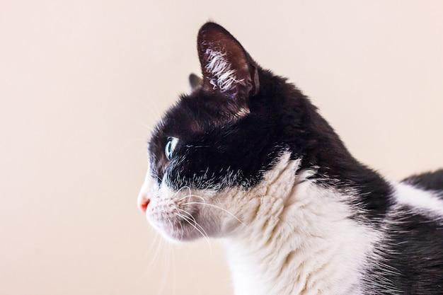 Zwart-witte kat met grote groene ogen kijkt weg.
