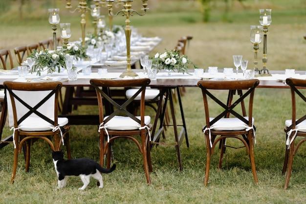 Zwart-witte kat op het gras in de buurt van de versierde feesttafel met chiavari stoelen buiten in de tuinen