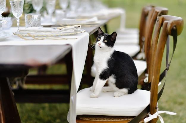 Zwart-witte kat zit aan gedecoreerde bruiloft tafel op de chiavari stoel
