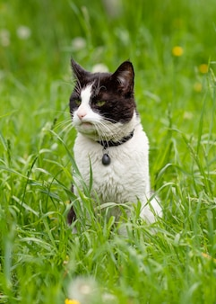 Zwart-witte kat zittend op het groene gras