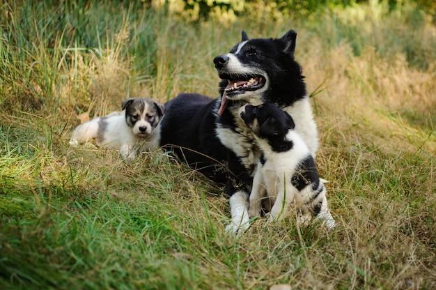 Zwart-witte laka-hond die met haar kleine puppy op het gras ligt