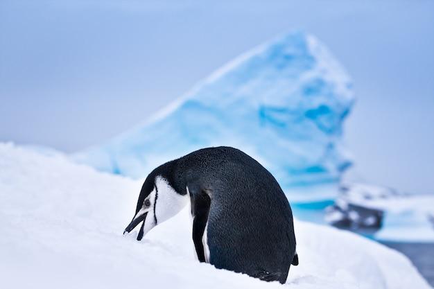 Zwart-witte pinguïn in sneeuwlandschap