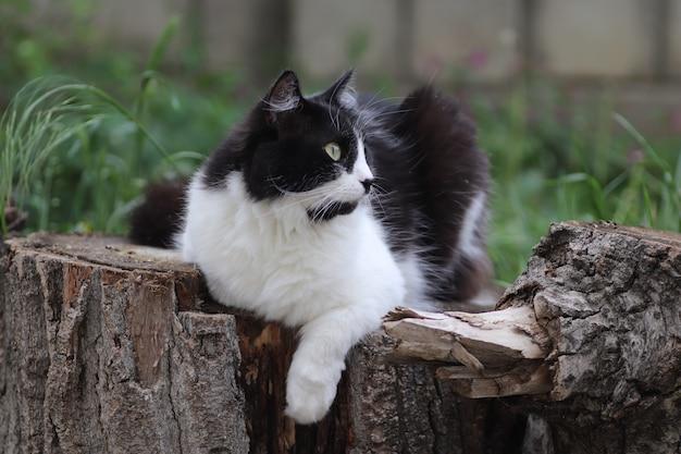 Zwart-witte pluizige kat zit op een boomstronk bij een bloembed met grote groene ogen