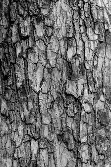 Zwart-witte schorstextuur en schorspatroon
