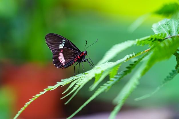 Zwart-witte vlinder op varenbladeren en ongericht achtergrond.