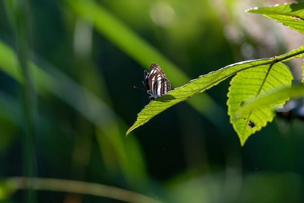 Zwart-witte vlinders met zonlicht in het bos.
