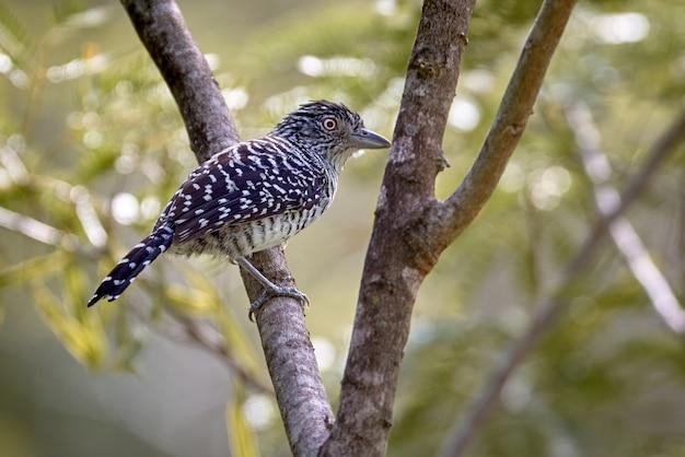 Zwart-witte vogel in een boom