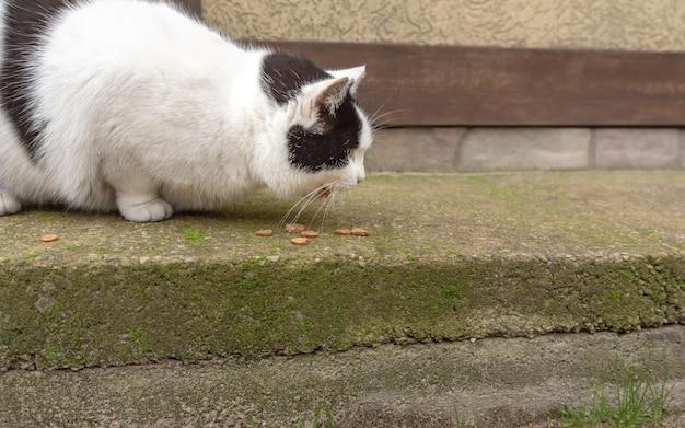Zwart-witte zwerfkat eet droog voedsel op stoep. help zwerfdieren, eten.