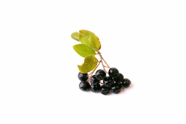 Zwarte appelbes geïsoleerd op een witte achtergrond