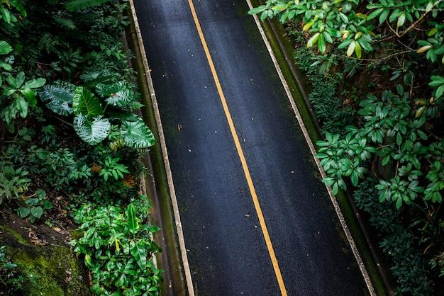 Zwarte asfaltweg. er zijn groene bomen aan de kant van de weg. licht dat door de boom schijnt, geeft een gevoel van eenzaamheid