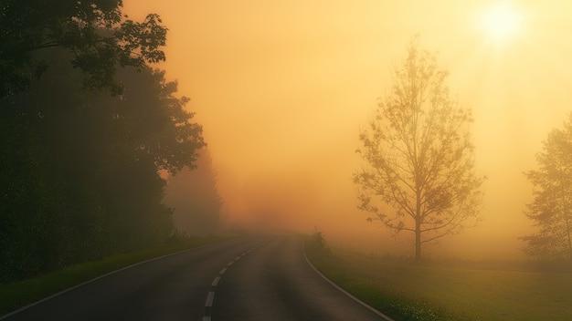 Zwarte asfaltweg tussen groene bomen tijdens zonsondergang