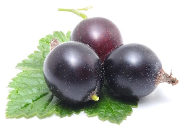 Zwarte bessen met bladeren dichten