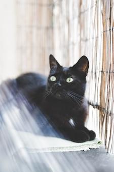 Zwarte binnenlandse kat die ochtend van zonlicht geniet.