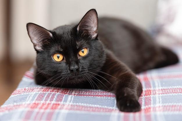 Zwarte binnenlandse kat die op bed in ruimte legt