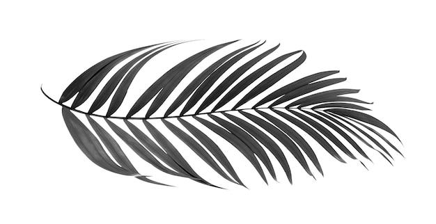Zwarte bladeren van palmboom die op witte achtergrond wordt geïsoleerd