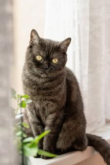 Zwarte cyperse kat zit op de vensterbank in de buurt van de potplanten