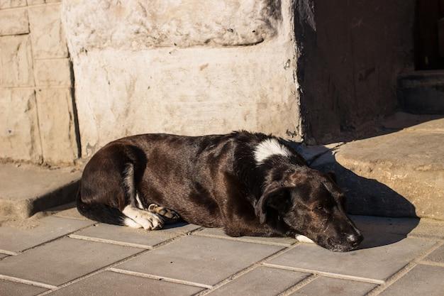 Zwarte dakloze hond rusten