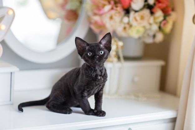Zwarte devonrex kitten zittend op een ladekast