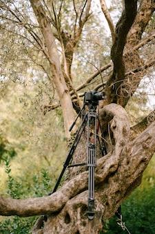 Zwarte digitale camera staat op een statief op een boom in het bos